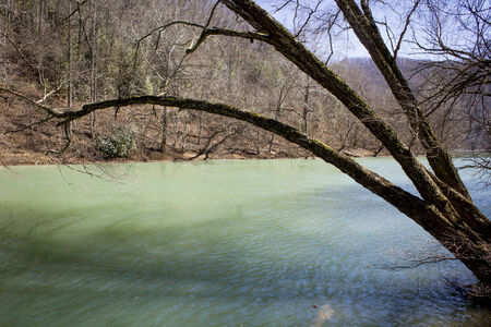 green river: Tree hanging over a green river in spring