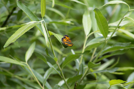 Orange and Black Butterfly Banco de Imagens - 28297609