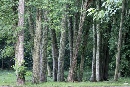 woodsy: A beautiful green woodsy forest