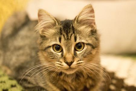 housepet: Hemingway Cat face