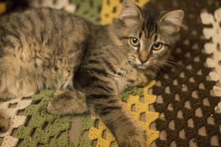 housepet: Kitten on a crochet blanket
