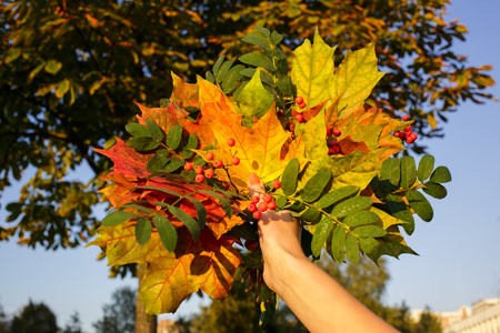Bouquet of yellow and green leaves with mountain ash branch in hand photo