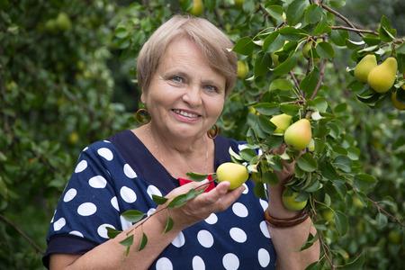 pensioner: Pensioner woman under pear tree Stock Photo