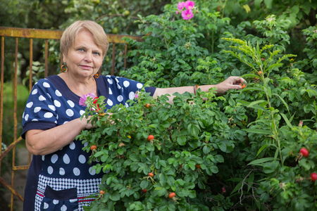 gerontology: Mature woman collects dog-rose Stock Photo