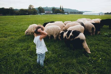 Baby girl with sheep in green meadow