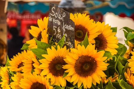 Sunflower on market closeup
