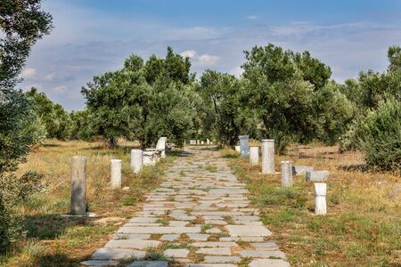 Old Roman road and ancient roman stone columns. Olive trees Stok Fotoğraf