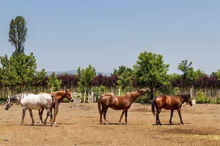 Horses on a sunny day