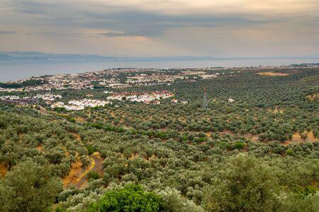 Olive trees farm in Edremit bay. Balikesir Turkey