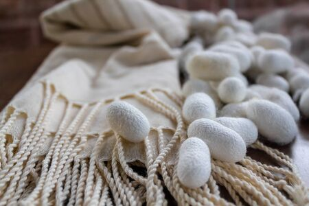 Silk fabric pongee white shawl and silk cocoons