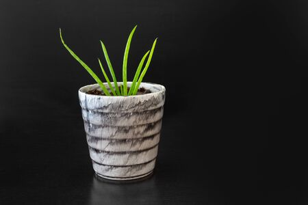 Green plant in a pot on isolated black background