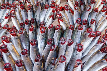Fresh bonito fish (Turkish: Palamut) at the fishing stand