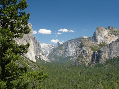 ponderosa pine: Tunnel  viewpoint at yosemite national park California USA