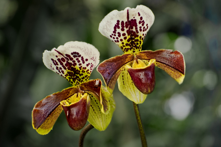 Orchids Reklamní fotografie - 56469231