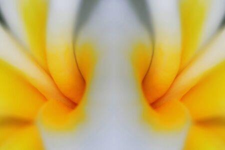 Plumeria Symmetry