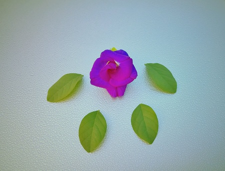 leafs: Pea flower and 4 leafs look like bear footprint