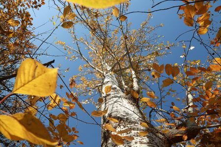 Nature change & Life change