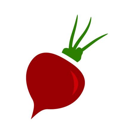 Vector sugar Beet illustration isolated - healthy vegetable, nutrition icon - veggie food, vector beetroot. Stock fotó - 100303361