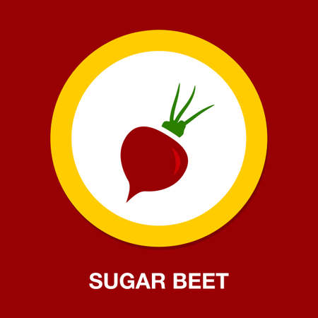 vector sugar Beet illustration isolated - healthy vegetable, nutrition icon - veggie food, vector beetroot Illustration