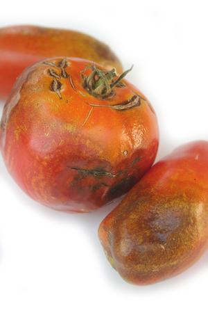 Rotten tomatoes isolated on white background