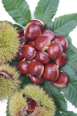 Chestnuts with leaves and husk isolated on white background Stock Photo