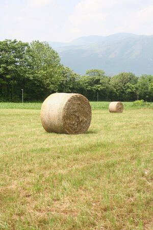 Golden hay bales on a meadow in summer. Agricultural field in the Northern Italy