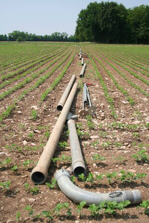 Agricultural water irrigation system on a green soybean field on summer