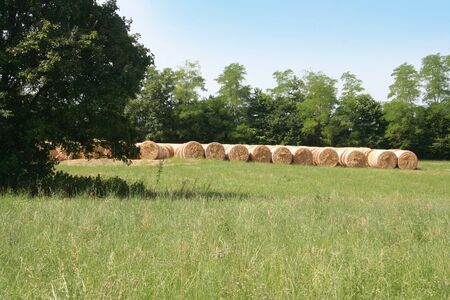 Golden hay bales in a row in the field. Italian countryside on summer. Banco de Imagens