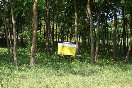 Yellow bee hive in the italian countryside landscape on a sunny day