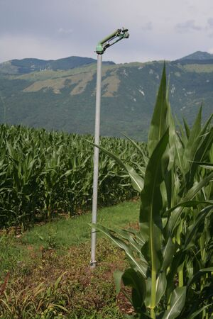 Agricultural water irrigation system on a green corn field on a summer in northern Italy