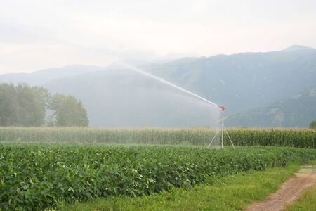 Agricultural irrigation system watering green soybean field. Soybean field on summer. Glycine max