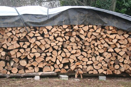 Large log store filled with firewood in the garden ready for winter season. Woodpile on outdoors