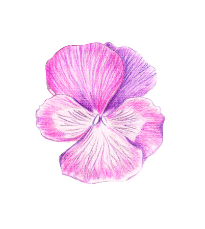 Illustration of a color picture of a watercolor orchid flower close-up top view Фото со стока