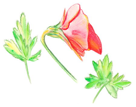 Illustration set of color drawing watercolor orchid flower and leaves close-up view from above Фото со стока