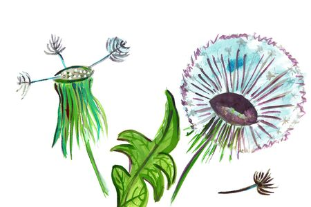 an inflorescence: Illustration inflorescence dandelion leaves