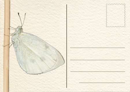 Postcard, card, postal card, white butterfly