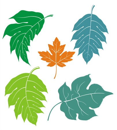 Leaves combo Illustration