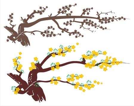 apricot blossom 向量圖像