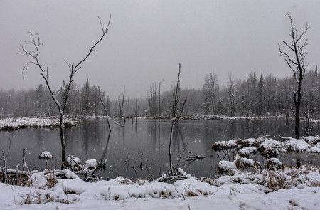 Snow storm in wetlands pond, snow blowing through scene