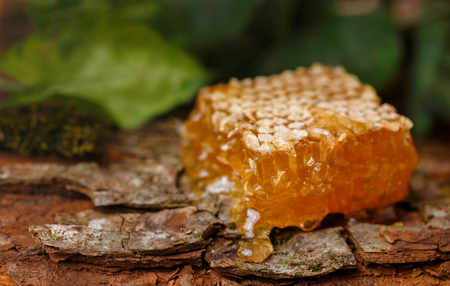 Honey on a background of honeycombs. Tree bark background. Honey in the forest