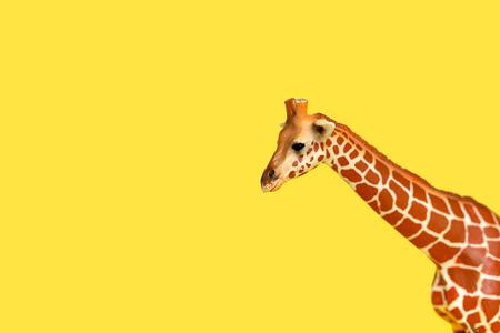Giraffe peeking out on a yellow background