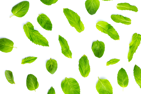 Fresh mint leaves on white background, leaves pattern, top view Imagens