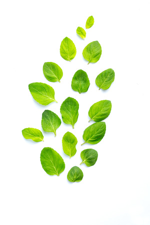 Leaves of fresh mint are laid out on a white background. Flight. Leaves pattern, top view Stok Fotoğraf