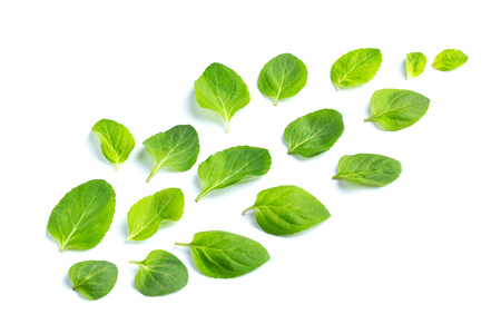 Leaves of fresh mint are laid out on a white background. Flight. Leaves pattern, top view 스톡 콘텐츠