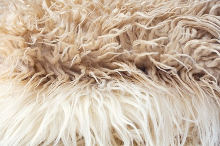 White soft wool texture background, cotton wool, light natural sheep wool, close-up texture of white fluffy fur, wool with beige tone, fur with a delicate tint. 版權商用圖片