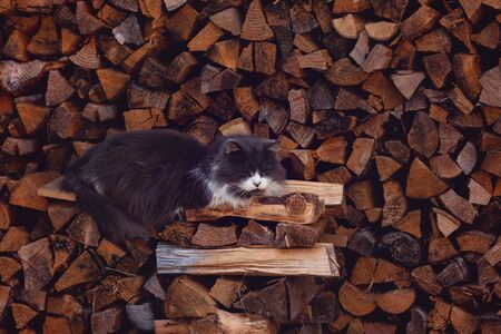 The cute Domestic Grey cat is sleeping on the logs Stock fotó