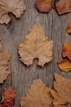 Frame of autumn leaves on a wooden background. Calm shades, weird, dusty color. Stock fotó