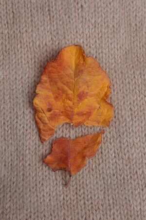 Autumn leaf broken into two halves on a brown knitted sweater background. concept