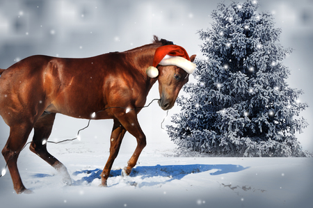 horse pull: Christmas Horse