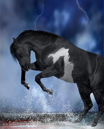 rearing: rearing stallion horse